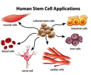 stem cell therapy applications